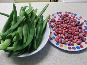 Runner beans and their seeds